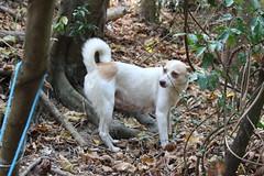 柴山上的狗。