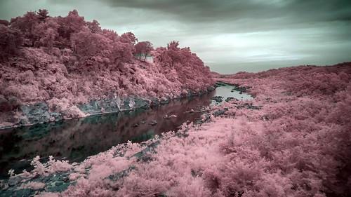 wallpaper tree river landscape ir virginia maryland infrared potomacriver xnitelumixlx3