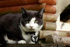 Eynimal Cat