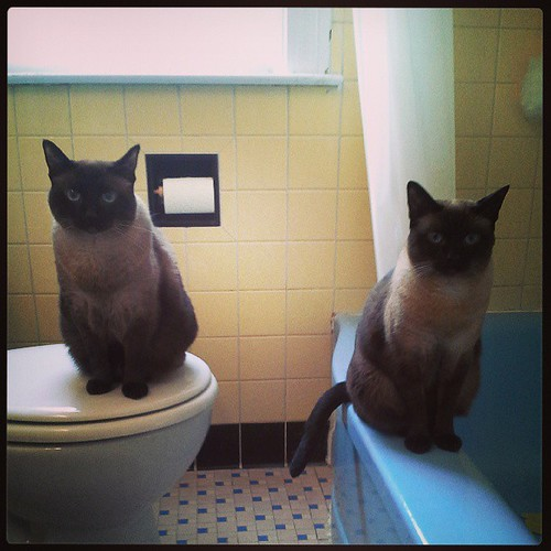9:56 am The bathroom inspectors on the job. #adayinthelifephotochallenge