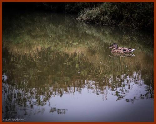 Duckiesindarain