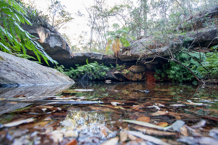 The 'Fern Tree Pool' - an oasis in an otherwise dry eucalypt forest.