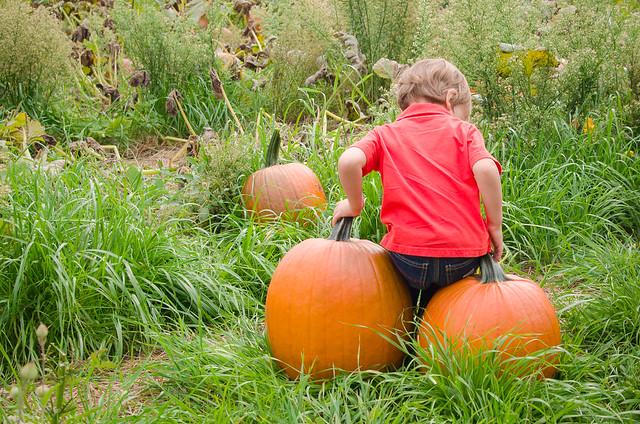 20131012-Pumpkin-Patch-0832