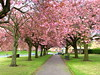 Blossom in Preston by Tony Worrall Foto