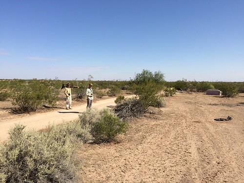 desert birdsbirdingmimidaemojave