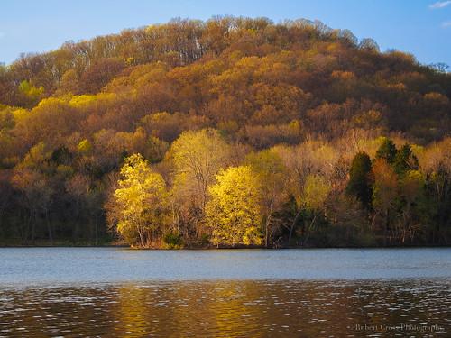 trees sunset color reflection forest landscape spring tn nashville tennessee bluesky olympus omd radnorlake middletennessee em5 70300mmf456zuiko dailyrayofhope2015