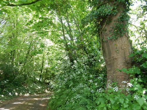 Verdant path