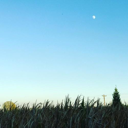 Autumn moon.