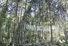 Photo:杜の蜃気楼 Mirage in the forest 御岩神社 県北芸術祭 Kenpoku Art 縣北藝術祭 By Jing Liao 廖品淨