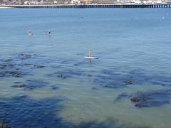 Paddle Boarding, Kayaking - Santa Cruz