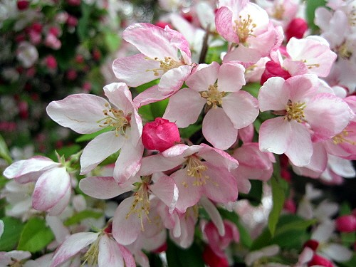 Easter blossom