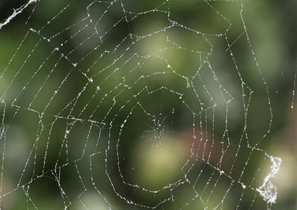 IMAGE: http://farm6.staticflickr.com/5444/6931229826_8d0d64aec8_b.jpg