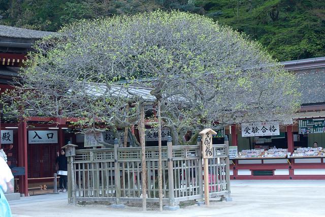 2012-kyushu-629