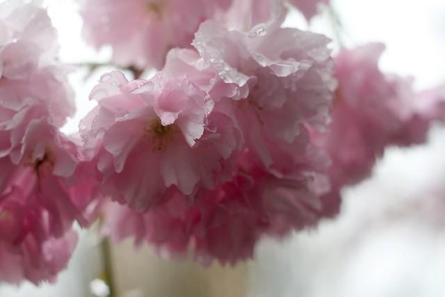 april flowers (2012)