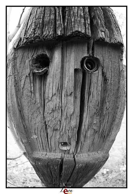 Le peuple de la forêt - Page 4 7081158595_2b9e251d3e_z