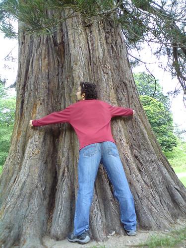 מחבק עצים