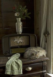 Натюрморт с кошкой