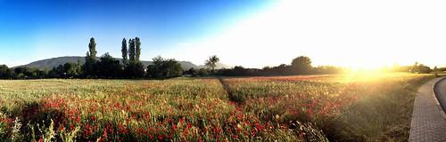 flowers panorama sun nature bardovci