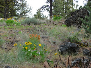 Paintbrush and balsamroot