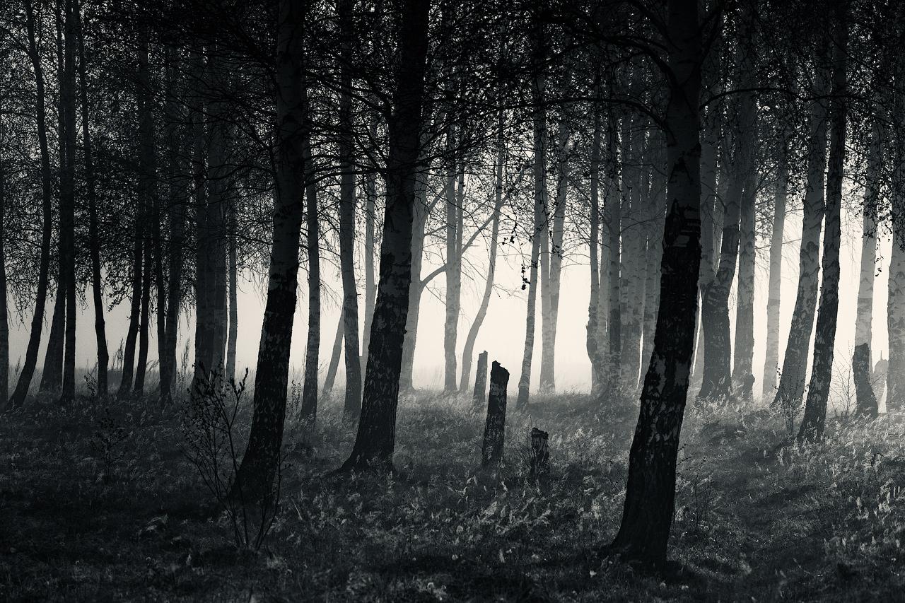 Mystical grove (II)