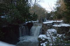 Winter 2013 (Jesmond Dene)  (9)