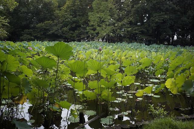 金沢北部公園にて