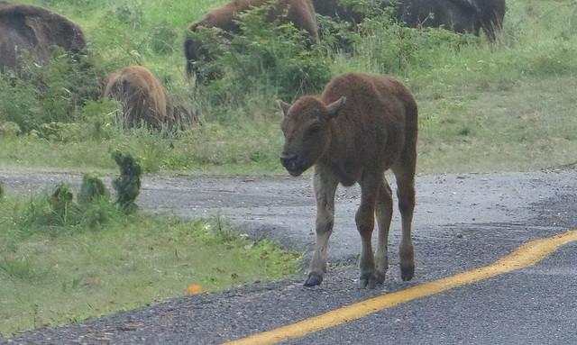 DSC06647 240813 Lone Elk Park