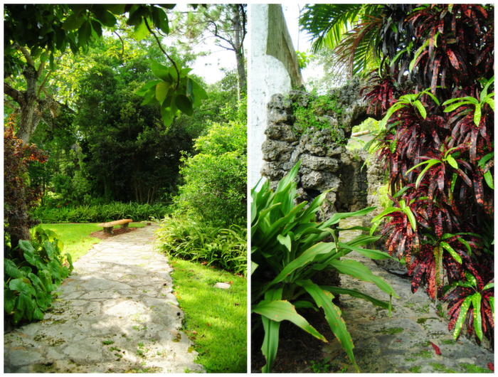 coral_rock_and_tropical_vegetation