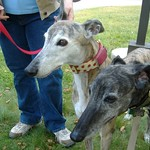 Greyhound Friends Open House