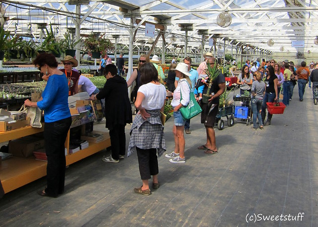 Long lines to check out at Succulent Gardens