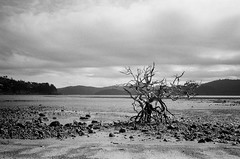 Hamilton Island - Ilford HP5+ film
