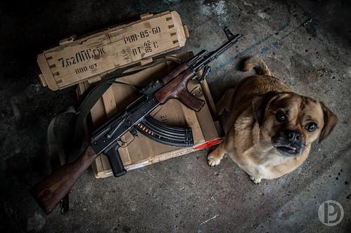 Kalashnidog