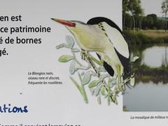 Boves: Réserve Naturelle de l'Étang de Saint-Ladre