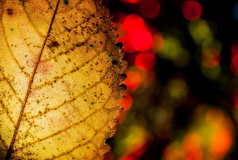 Leaf Bokeh