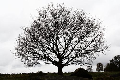 Shipley Glen Tree