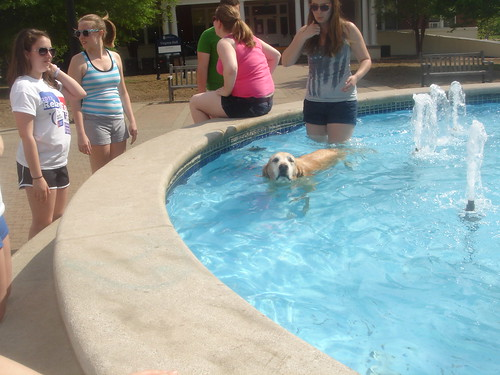 doggy in the fountain?!
