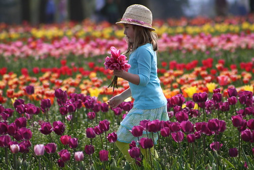 Collecting Tulips