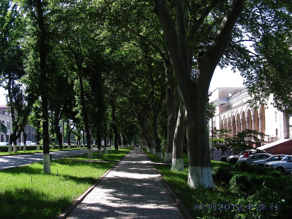 春天绿树广场林荫图片