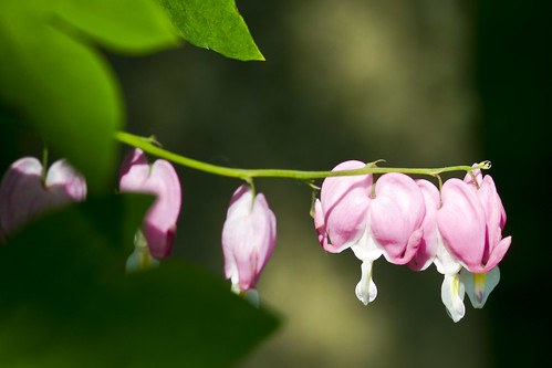 june flowers-4795-6