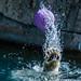 Splash! by Eve'sNature