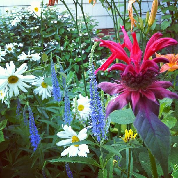 festive flowers #urbangarden #organic