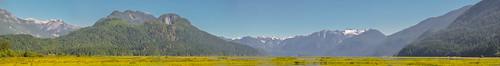 <p>Grant Narrows, Pitt Meadows, British Columbia, Canada<br /> Nikon D5100<br /> June 30, 2013</p>