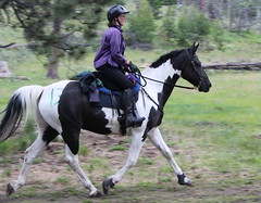 animal sports, equestrianism, english riding, mane, eventing, dressage, mare, stallion, equestrian sport, rein, trail riding, sports, recreation, outdoor recreation, endurance riding, bridle, equitation, horse, mustang horse, jockey,