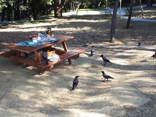 Varjak, amint szétszednek egy terített asztalt