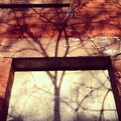 Just another branch in the #wall #shadow #tree #NYC