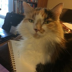 Oh this notebook? Nope, not moving, don't care. #tryntowork, #catsdontcare