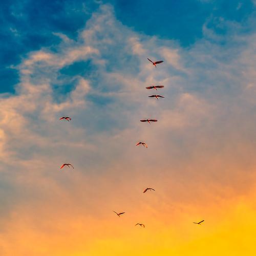 aves colores sunset sudáfrica southafrica cuadrado square soweto birds