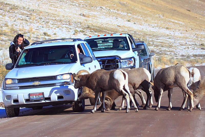 IMG_6516 National Elk Refuge