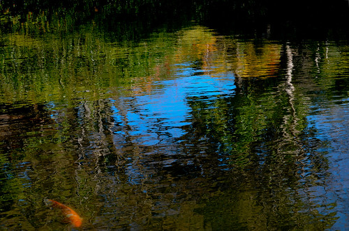 fish colors reflections cores texas peixe carp carpa fortworthbotanicalgardens leley jardimbotanicodefortworth
