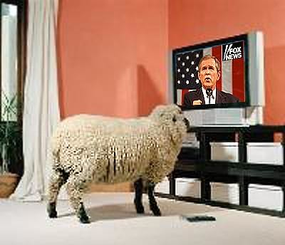 OBEY SHEEP.